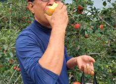 사과따기체험 진행중