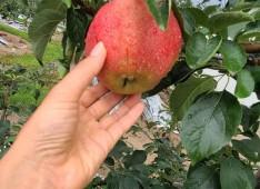 농산촌 생태프로그램